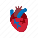 anatomy, blood, cardiology, heart, human icon