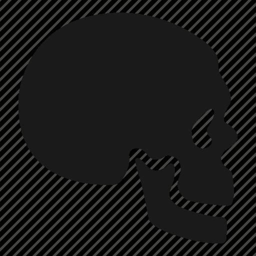 Bone, skeleton, skull icon - Download on Iconfinder