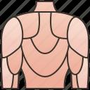 back, body, dorsal, human, muscular