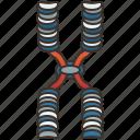 chromatid, chromosome, dna, genetic, molecular icon