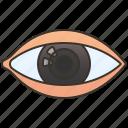 cornea, eye, human, optic, vision