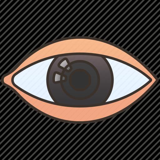 Cornea, eye, human, optic, vision icon - Download on Iconfinder