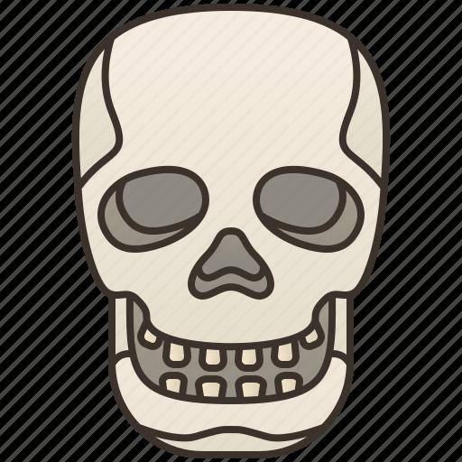 Death, head, human, skeleton, skull icon - Download on Iconfinder