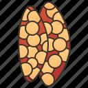 gland, immune, lymphoid, organ, thymus icon