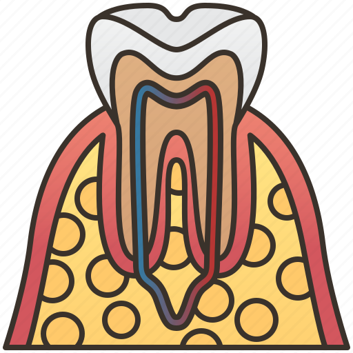 anatomy, dental, gums, tooth, vessels icon