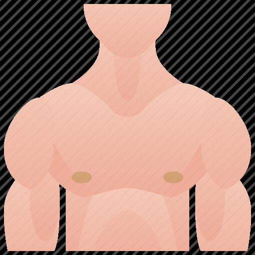 Bodybuilder, chest, human, muscular, torso icon - Download on Iconfinder