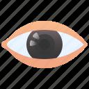 cornea, eye, human, optic, vision icon