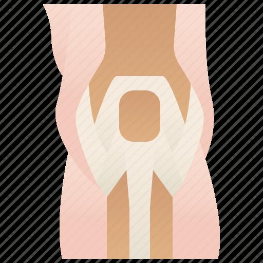 anatomy, joint, knee, ligament, orthopedic icon