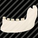 bone, human, jaw, mandible, teeth icon