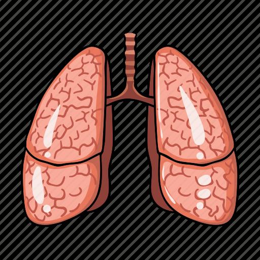 anatomy, human, internal, lung, medicine, organ icon
