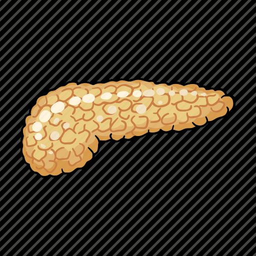 Anatomy, human, internal, medicine, organ, pancreas icon - Download on Iconfinder