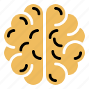 brain, cerebrum, hemisphere, intelligence, organ
