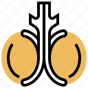 gland, male, orchis, reproduction, testicles icon