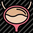 bladder, excretion, organ, sac, urinary icon