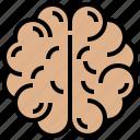 brain, cerebrum, hemisphere, intelligence, organ icon