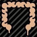 bowel, colon, digestion, intestine, large icon