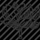 lotus, flower, plant, aquatic, garden
