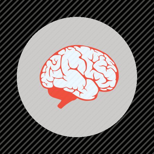 bodypart, brain, creative, human, idea, innovation icon