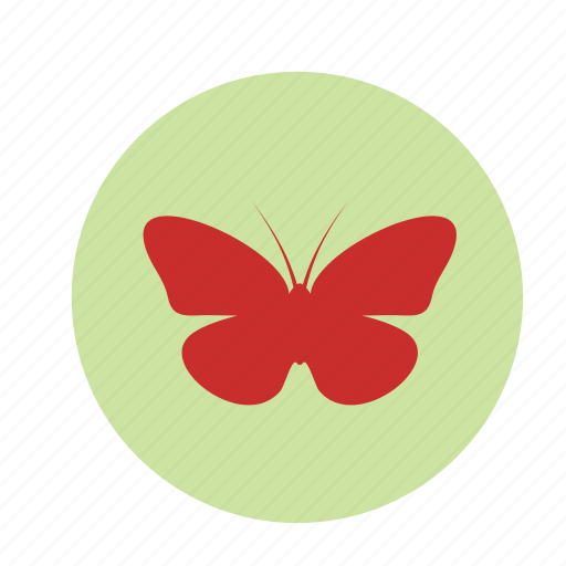 butterfly, halloween, insect icon