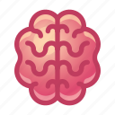 brain, organ, anatomy