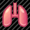 lungs, organ, anatomy