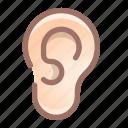 ear, organ, anatomy