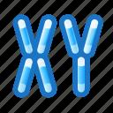 chromosomes, gene, xy