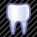 tooth, dental