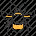 bumblebee, animal, bug, insect