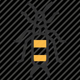 animal, bug, earwig, insect icon