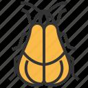 beetle, net, winged, animal, bug, insect