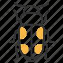 sap, animal, beetle, insect, bug