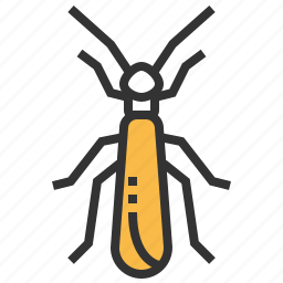 animal, bug, insect, stonefly icon