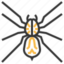 spider, wolf, animal, bug, insect