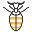 animal, antlion, bug, insect icon