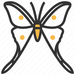 animal, argemme, bug, insect, papillon icon