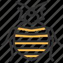 bedbug, animal, bug, insect