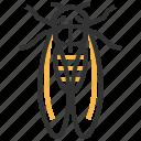 cicada, animal, bug, insect
