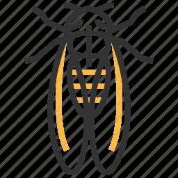 animal, bug, cicada, insect icon