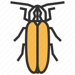 animal, bug, firefly, insert icon