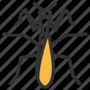 mantis, animal, bug, insect