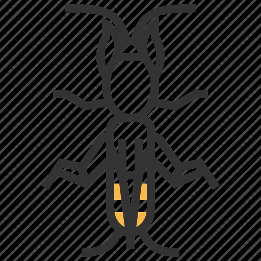 animal, bug, cricket, insect, mole icon