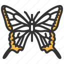machaon, papilio, animal, bug, insect