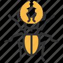 beetle, animal, bug, insect