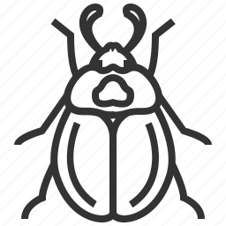 animal, beetle, bug, carrion, insect icon