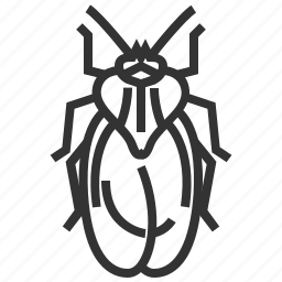 bug, insect, lace icon