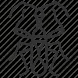animal, bug, insect, myodocha, serripes icon