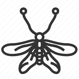 animal, bug, insect, owlfly icon