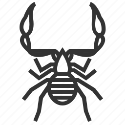 animal, bug, insect, pseudoscorpion icon