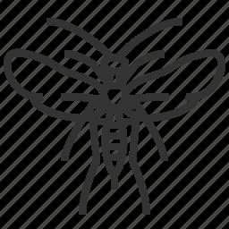 animal, bug, insect, sawflies, stem icon